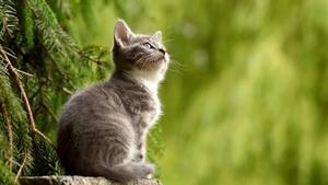 Todavía surgen muchas preguntas acerca del ronroneo de los gatos