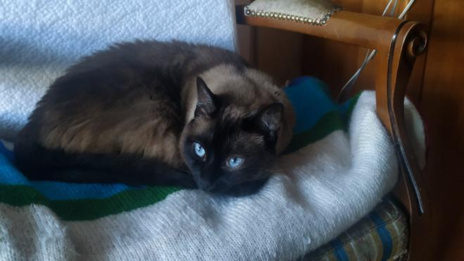 No, este gato si existe y se llama Pelusa