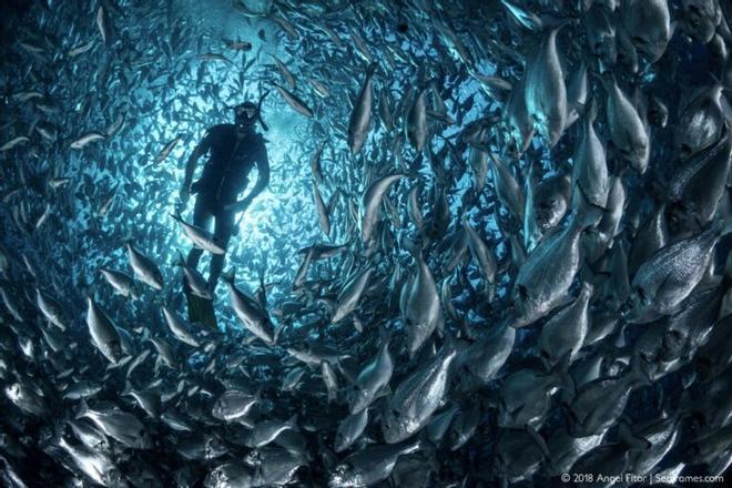Inventan un sistema de conteo de peces que «revolucionará la acuicultura»