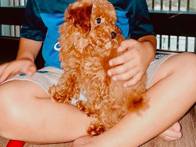 Antonela Roccuzzo comparte una fotografía con Abú, el nuevo perro de los Messi