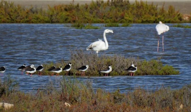 Delta del Llobregat, un paraíso de la biodiversidad en peligro