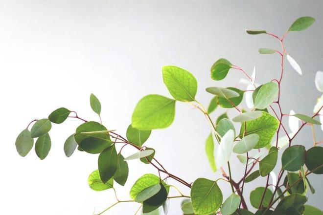 Las plantas recuerdan las sequías y ahorran agua