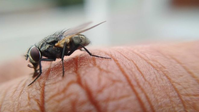 Cómo engañar a tu cerebro, y al de una mosca, para que escoja un alimento más saludable