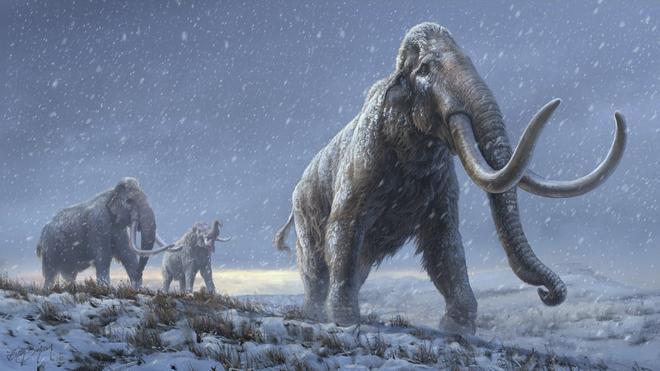 Un grupo de científicos intentará resucitar al mamut