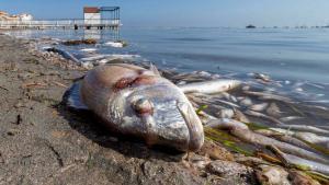 El Instituto de Oceanografía concluye que los fertilizantes agrícolas matan el Mar Menor