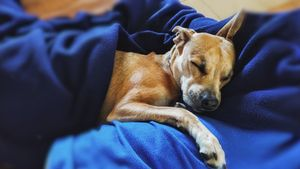 dormir-perro