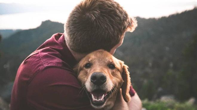 El parvovirus, la enfermedad con un 50% de mortalidad en los perros