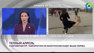 El vídeo más viral del momento: ¡Un perro le quita el micrófono a una periodista en pleno directo! Atención a su reacción...