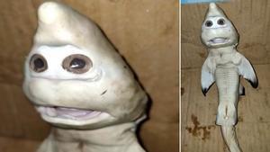 Descubren un tiburón con una extraña cara de humano en Indonesia