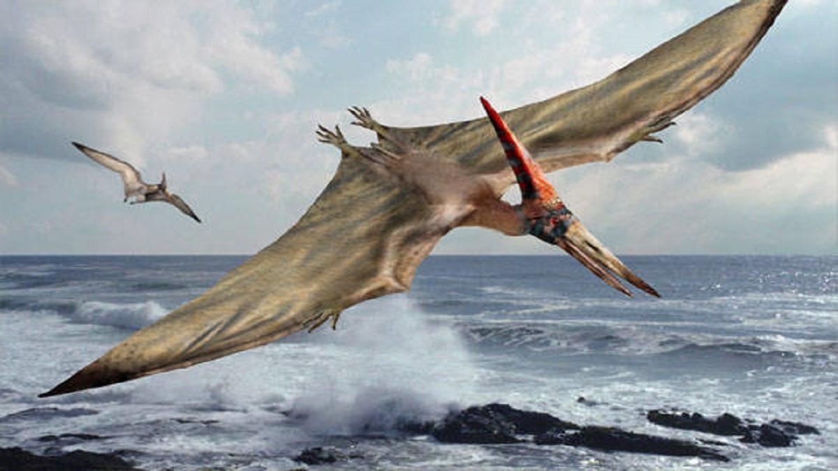 Hallan el primer dragón volador en el desierto de Atacama (Chile)