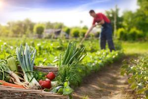 España se consolida como líder europeo en agricultura ecológica